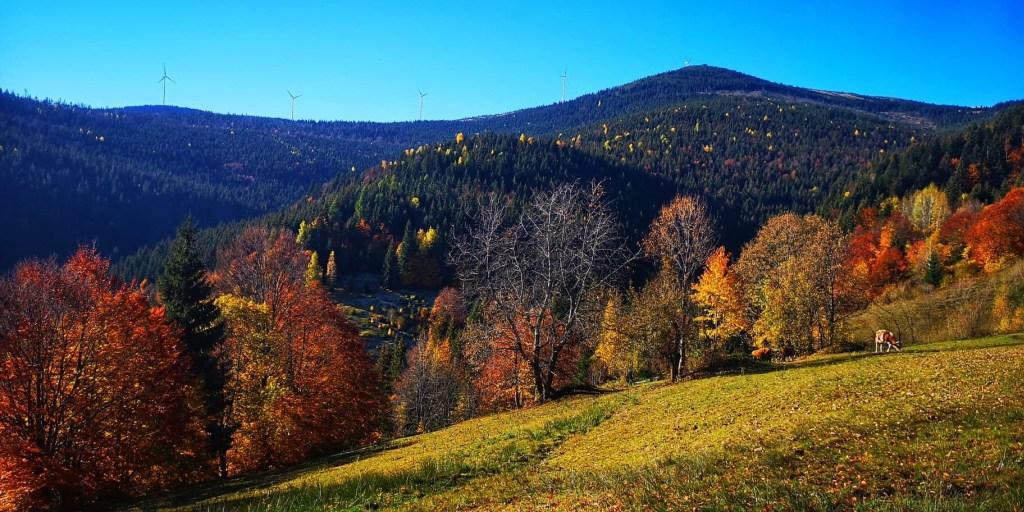 Atracții naturale din Munții Bihorului