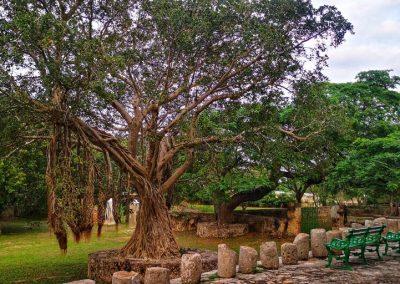 Hacienda Yaxcopoil17