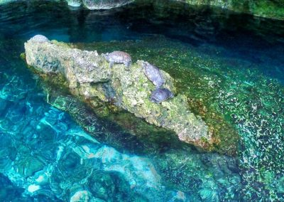 Gran Cenote5