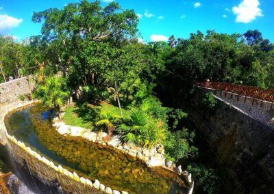 Insula jaguarilor si pumelor1