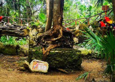 Paradise River papagali