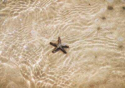 Punta Mosquito2