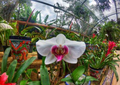 Xcaret orchid museum2