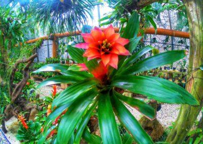 Xcaret orchid museum3