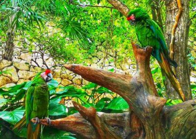 Xcaret papagali1